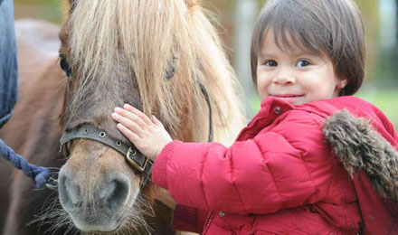 OMG  you can spend a day with Shetland Ponies