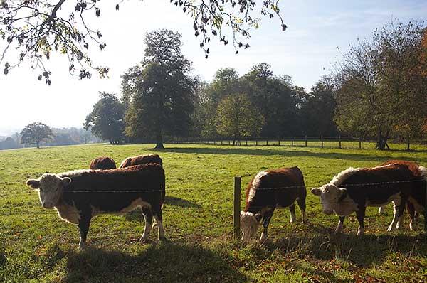 St Pauls Walden Bury Farm